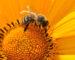 dofinansowanie-pszczoly-agroprofil