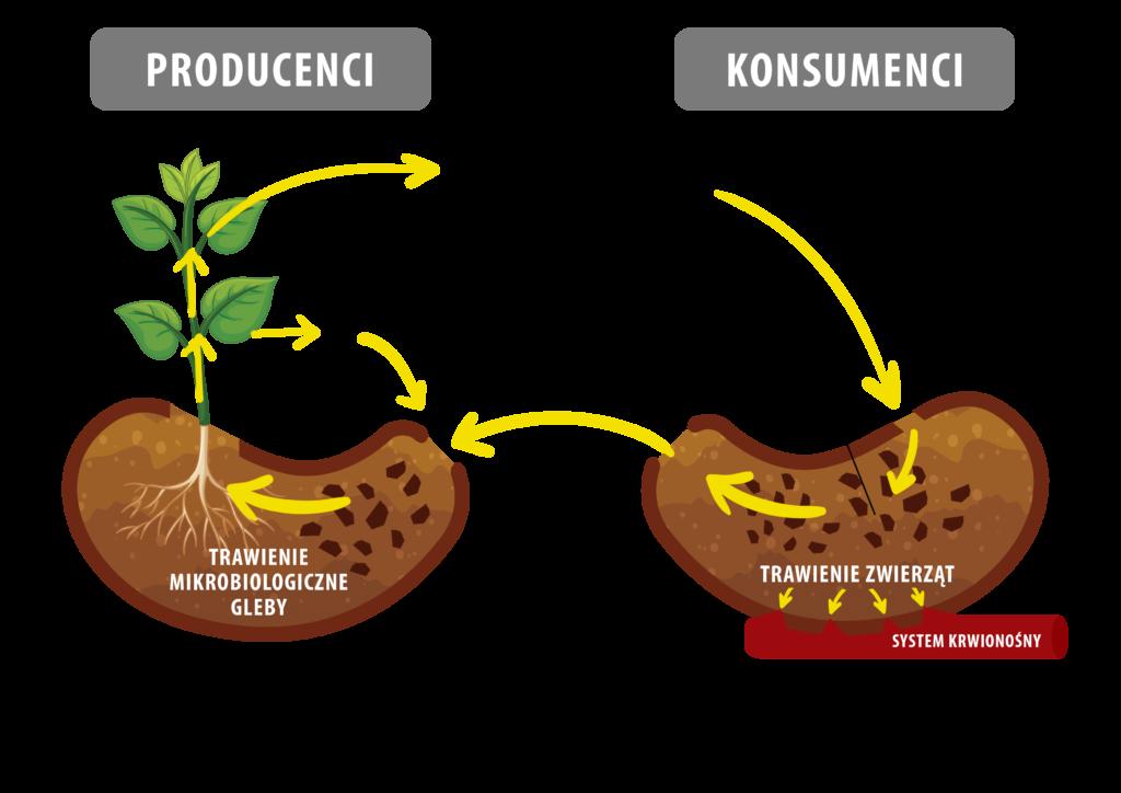 Co warto wiedzieć o biologizacji?