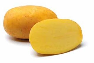 Ziemniaki Agria