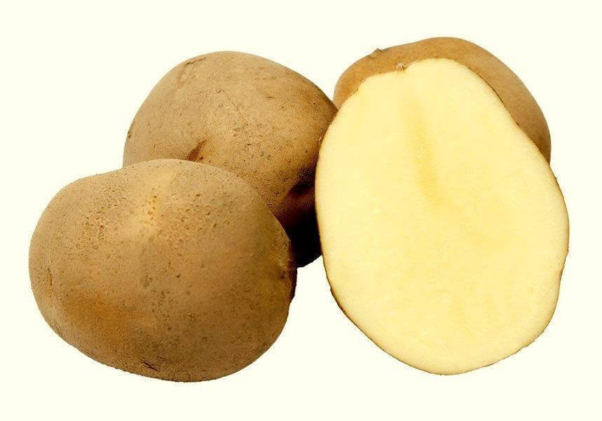 Ziemniaki Glada