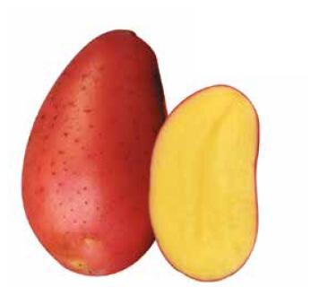 Ziemniaki Red Fantasy
