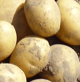 Ziemniaki Birte