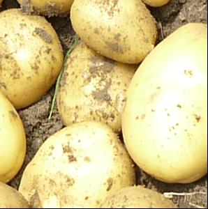 Ziemniaki Soraya