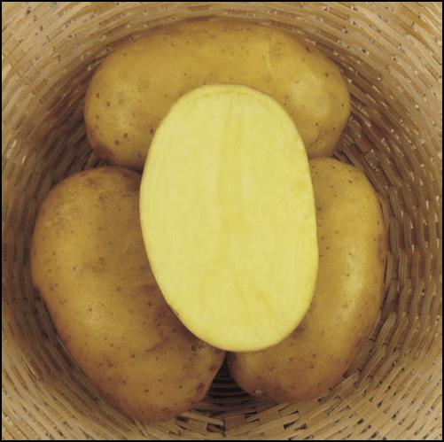 Ziemniaki Swing