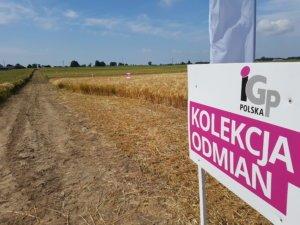 IGP Polska Młociny