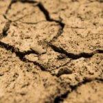 Pomoc suszowa: ponad 403 mln zł trafiło już do rolników