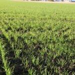 Na co zwrócić uwagę przy ubezpieczaniu upraw na wiosnę?